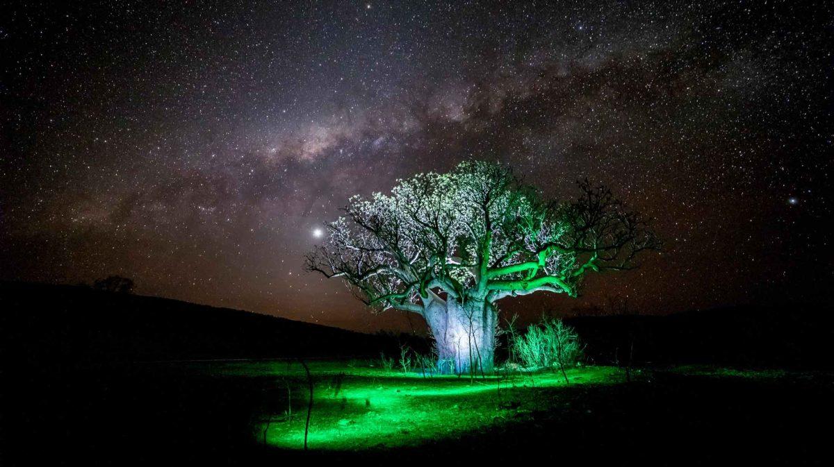 Light Painting Tree's
