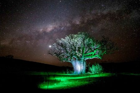 Light Painting Tree's