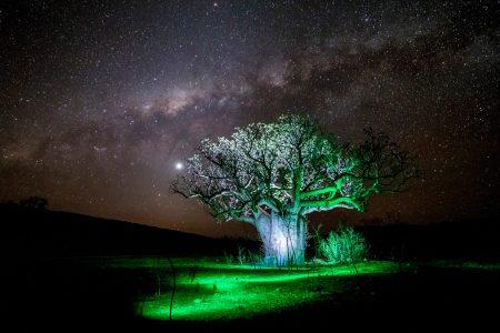 LightPainting-Gunnar-Heilmann-Australia-OZ-Boabab-tree-Milkyway-green-stars