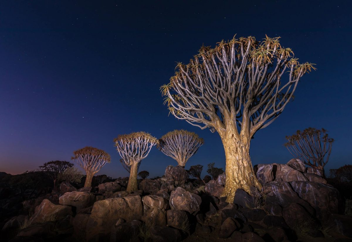 Light Painting Namibia Quiver tree