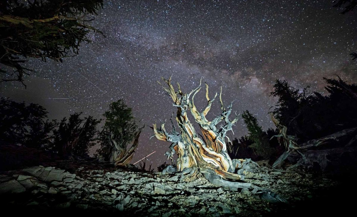 Light Painting Photography tree Bristlecone