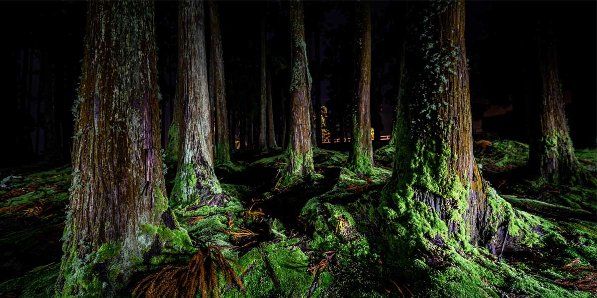 Light Painting Furnas Forest