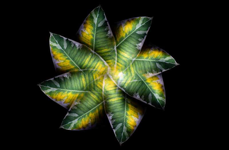 Camera Rotation Light Painting Leaf
