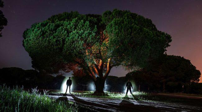 Light Painting Trees